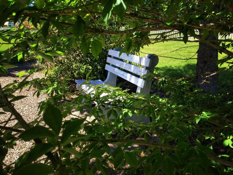 Bench Trees Taking Photos Summer Sunny Day Maine