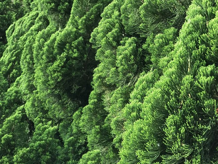 Green Color Full Frame Growth Backgrounds Plant No People Day Beauty In Nature Nature Close-up Tree Foliage Lush Foliage High Angle View Outdoors Pattern Freshness Land Forest Tranquility Layered