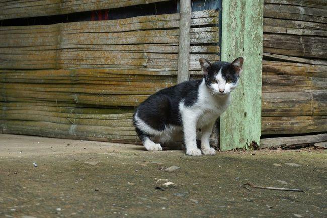 🐈🐱 Animal Cat Cats Of EyeEm Lonely Sad Face Panic