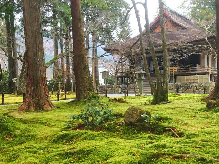 Sanzenin temple in kyoto japan. Jizou Tree Grass Growth Green Color Nature Day No People Outdoors Beauty In Nature