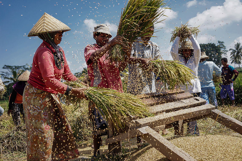 Harvest Harvest