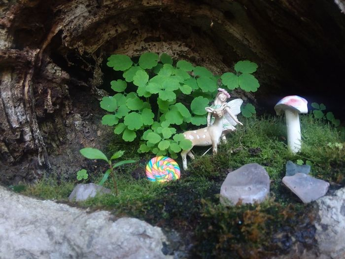 Dance with the fairies Fairy Garden Pennsylvania Summertime Lakeside Moss Trees Creekside Deer Mushroom Clovers  Grass Close-up Plant Green Color Growing