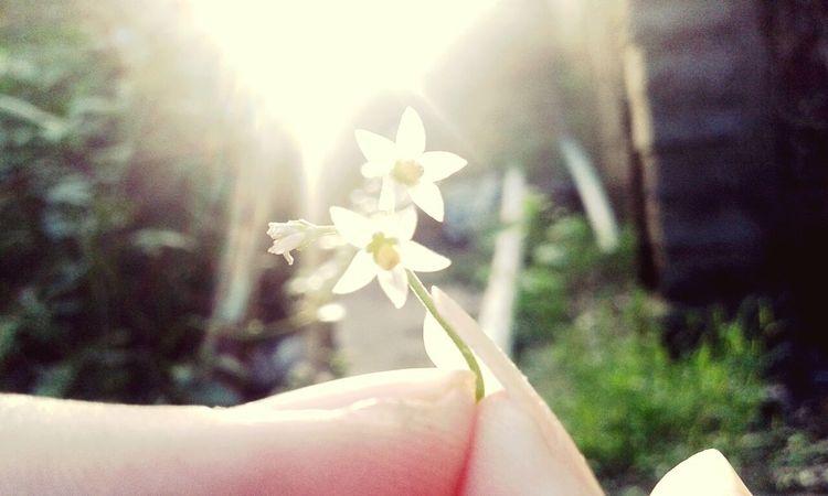 Hoa Hoa