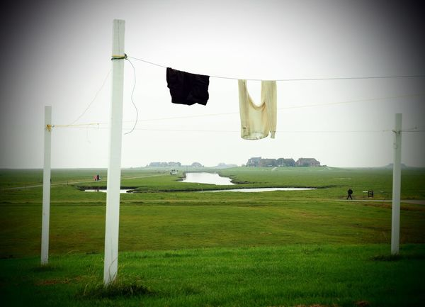 Hooge Schleswig-Holstein Beauty In Nature Clothesline Day Drying Europe Field Germany Grass Green Color Hallig Hanging Landscape Laundry Nature No People Outdoors Sky Tranquil Scene Tranquility Tree Wooden Post