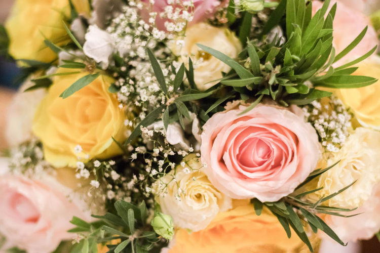 Flower Flowering Plant Plant Freshness Beauty In Nature Rosé Rose - Flower Vulnerability  Petal Inflorescence Flower Arrangement Selective Focus Pink Flower Yellow Flower