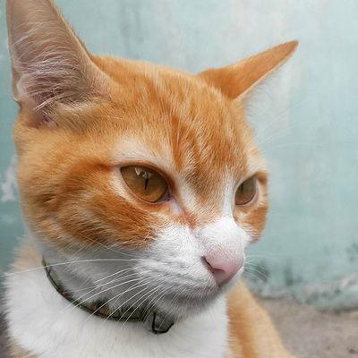 DiárioDeAslan :Que tal uma de perfil? Coisa maaaaaais gostosaa! 😍😍 Galaxys4camera Instafofura Instacat gato instapet felino