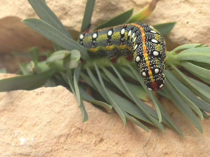 Nature Insects  No People Close-up Caterpillars  Animal Texture Yellow Green