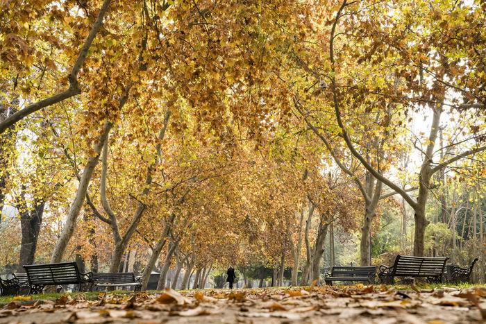 Authentic Moments Autumcolors Autumn Autumn Autumtrees Nature Park Santiago De Chile Squere Tree