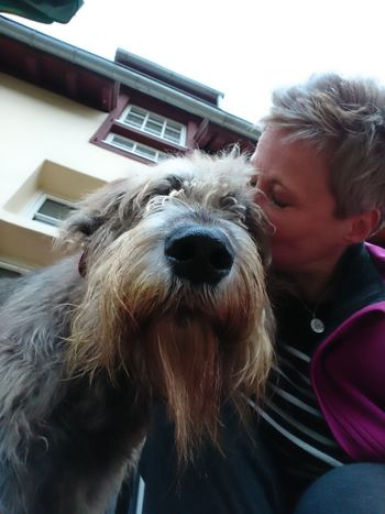 Selfie😂😂 One Animal Domestic Animals One Person Dog People Pets Dogs Dogs Dogs Dogs Of EyeEm Hello World Gentle Giant. Irish Wolfhound Mommysboy Have A Nice Day♥ Willi The Wolfhound Love ♥ Smooch Beard Beardlovers