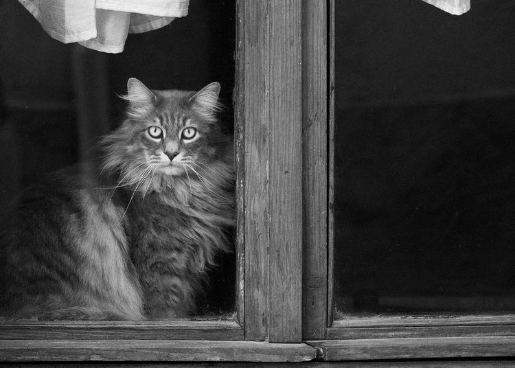 Close-up portrait of cat on window
