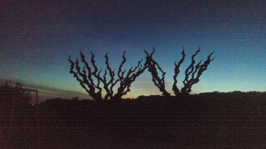 Landscape Sunset Mobile Photography