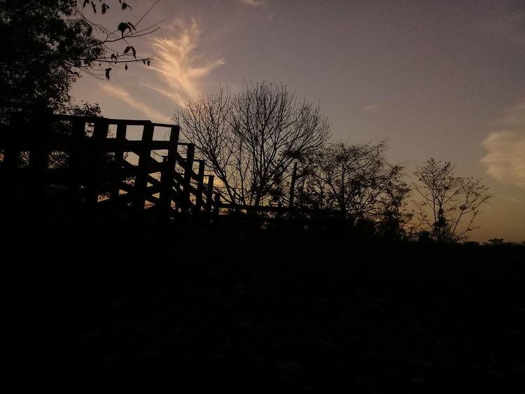 súper atardeser 😍 Tree Spraying Silhouette Sunset Sky