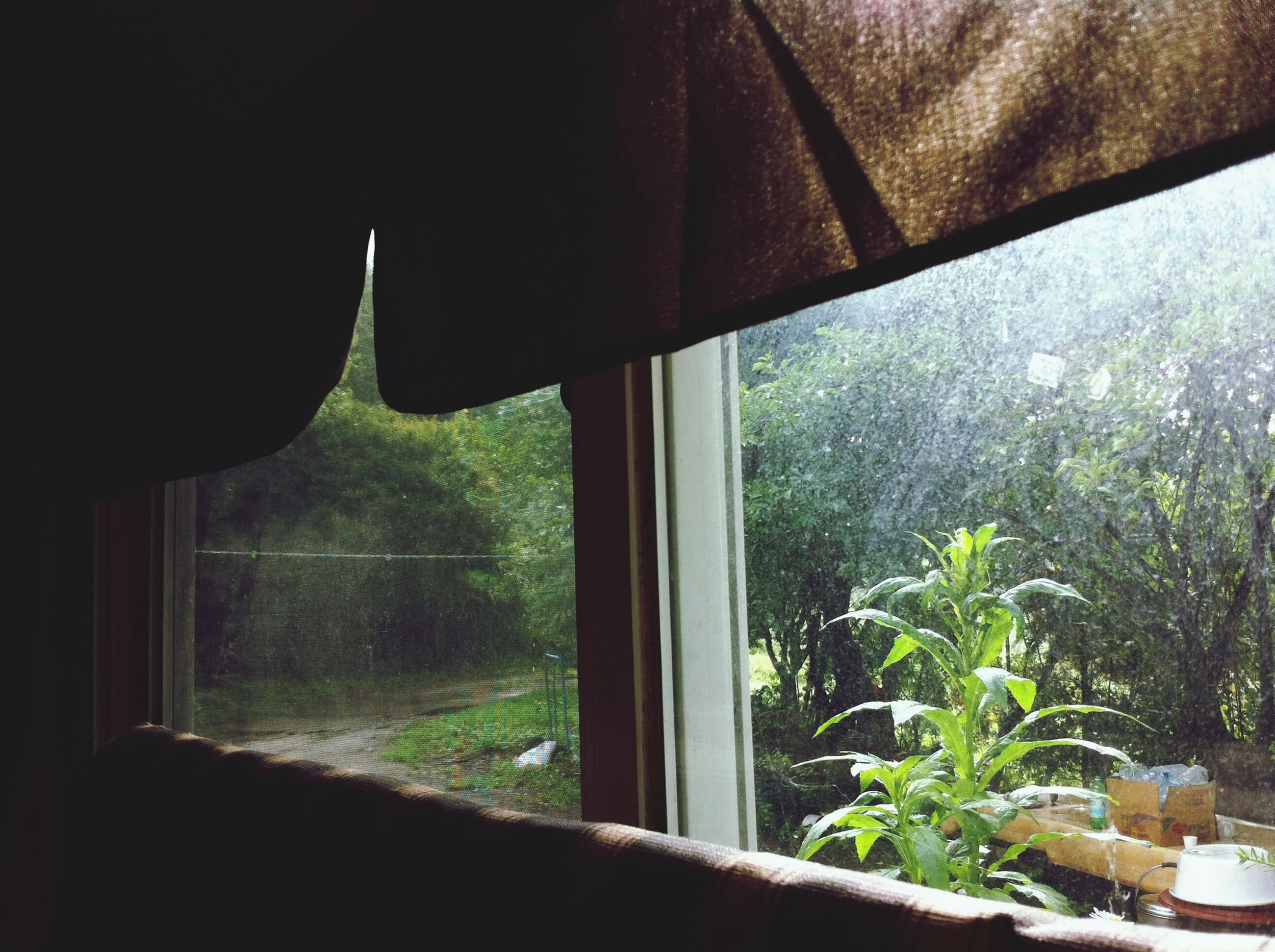 window, tree, growth, transparent, indoors, green color, plant, glass - material, sunlight, nature, day, beauty in nature, no people, potted plant, tranquility, grass, close-up, curtain, green