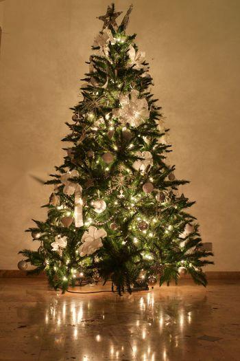 Christmas Lights!  Christmas Tree