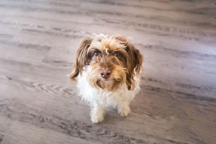 High angle portrait of dog on floor