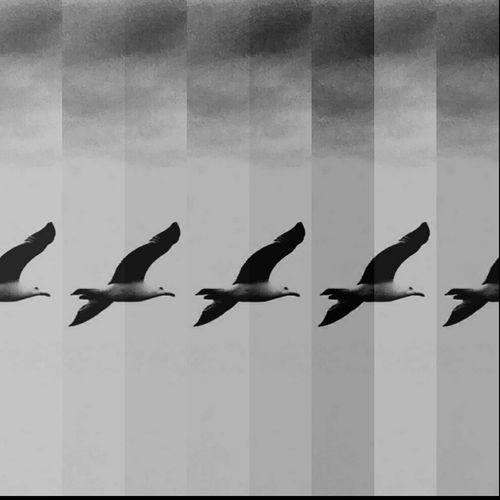 Seagull Seagulls Blackandwhite Black And White Black & White Black And White Photography Gabbiano Gabbiani Artistic Photo Artistic Photography Artistic Expression Foto Art Art Arte Cielo Sky Grey Dark Monochrome Monochromatic Monocromo