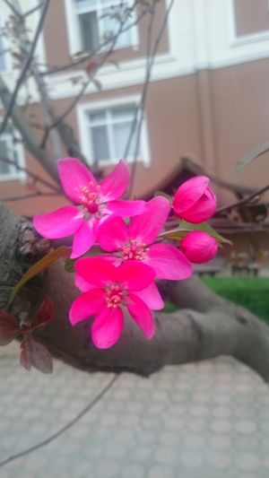 Hello World Flowers Nature_collection Nature_perfection Sscwashere