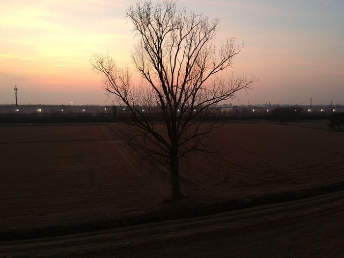 Dji Spark Sunset Bare Tree Landscape Tranquility Tree Beauty In Nature Tranquil Scene Sky Scenics Nature Day No People Outdoors Lone Branch Shades Of Winter Shades Of Winter