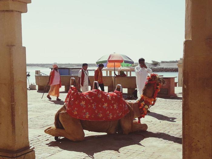 Creativity on Animals Summer Decoration Gujrat The Creative - 2018 EyeEm Awards Full Length Sitting Beach City Sea Camel Working Animal