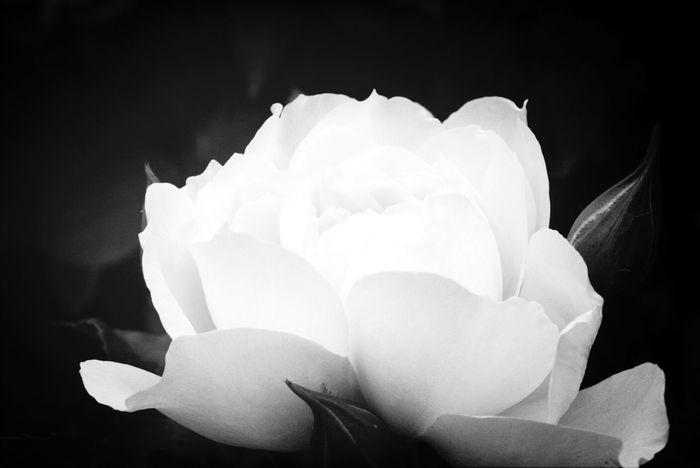Black & White Flowers Macro