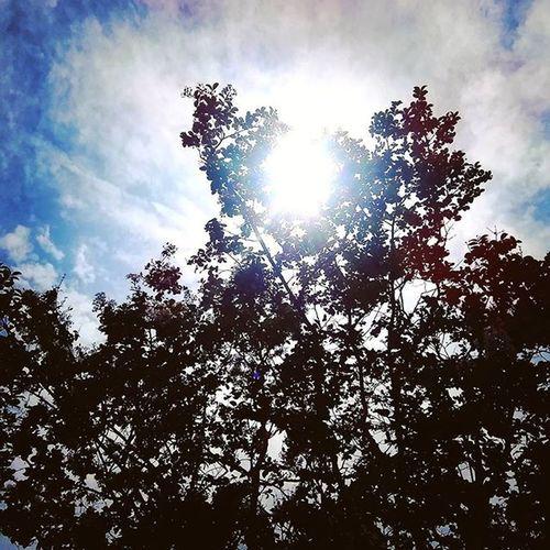 Nature Sky Sun 空 太陽 自然 夏の終わり 夏の午後 夏の日差し 夏 木 まぶしい