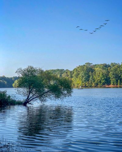 Lake views are amazing Bird Water Sky Vertebrate Animal Wildlife Animal Tree Animal Themes Group Of Animals Beauty In Nature Animals In The Wild Nature Waterfront Plant Large Group Of Animals Flying Clear Sky Flock Of Birds No People Scenics - Nature