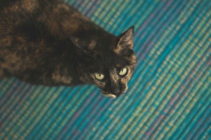 Sweet Aya Catlover ♡ Mycat♥ CatEye Cats Of EyeEm Brighteyes  Cat