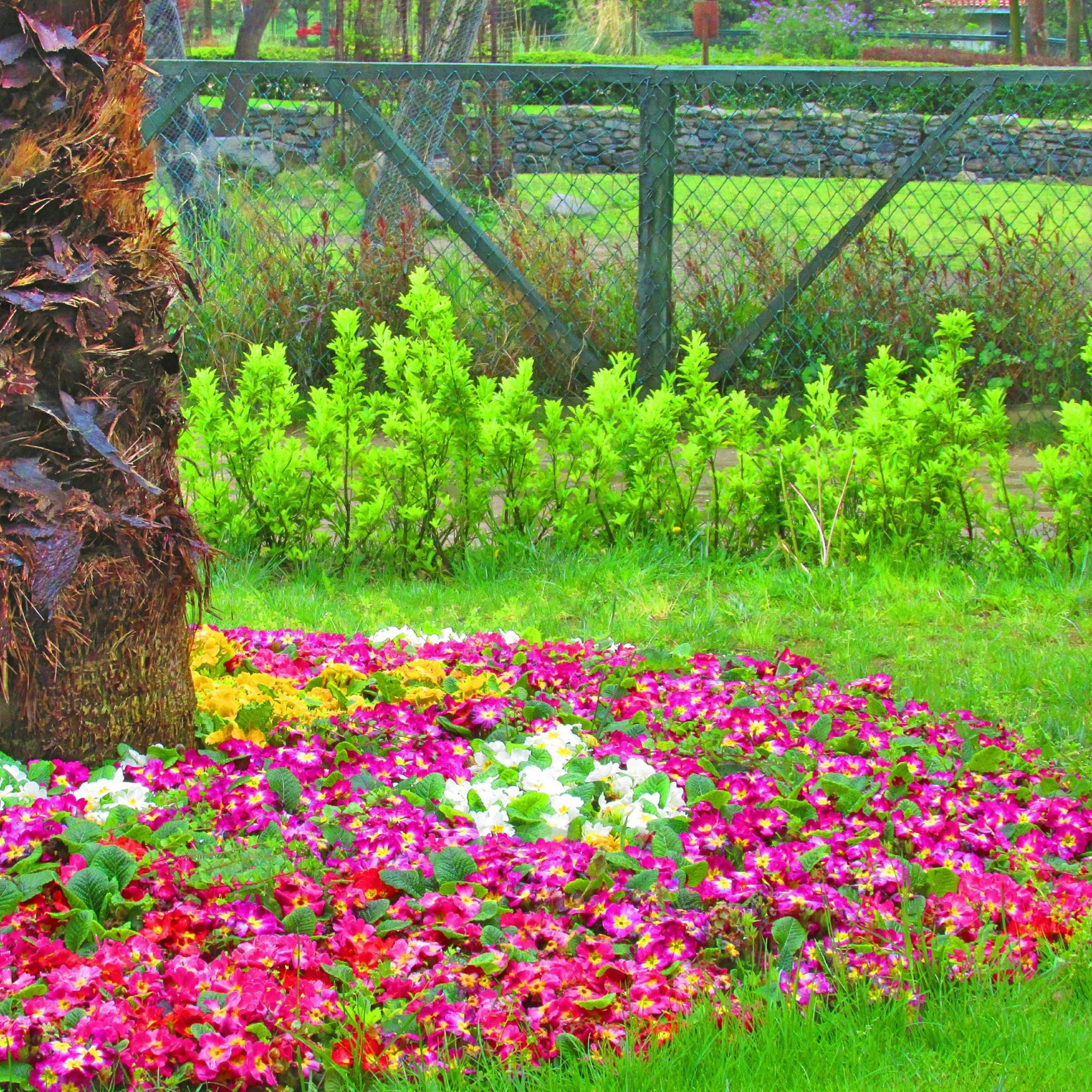 flower, growth, freshness, beauty in nature, fragility, nature, plant, blooming, park - man made space, petal, grass, tree, green color, in bloom, pink color, blossom, tranquility, garden, field, formal garden