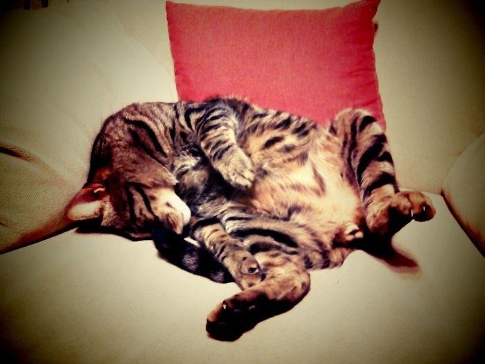 sleepy cat... Cat Lovers Animal Portrait Eyem Animal Lovers