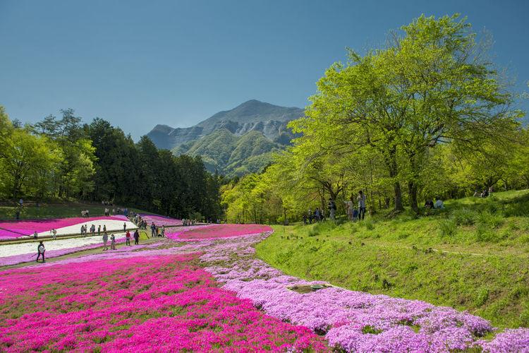 Spring folwer
