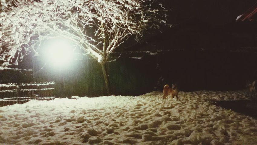 Cold Winter ❄⛄ Snow ❄ Maiko Shiba Inu Animal Dog Puppy