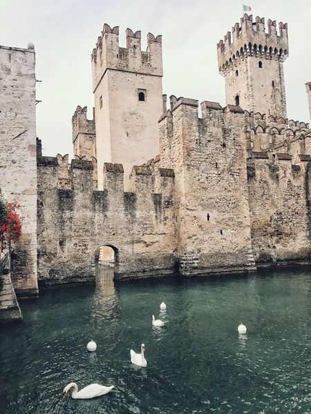 I'm waiting for the dragon to come out soon and incinerate the dear ducks. Landmark Ducks Rocca Scaligera Fortress Castle Water Built Structure Architecture Building Exterior Bird Nature Group Of Animals Animal Themes Vertebrate Animal Large Group Of Animals Waterfront Travel Destinations