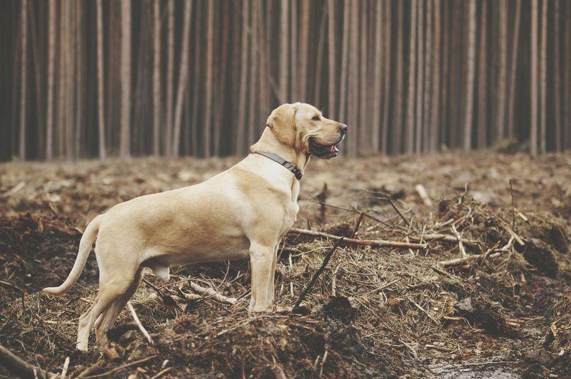 Dog on ground