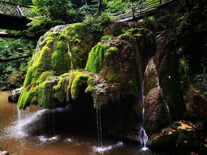 Sound of nature. Waterfall Sound Of Nature Green Color Earth Bigar Romania Water Tree Close-up Flowing Moss Woods Streaming Young Plant Grassland Rock Falling Water Flowing Water