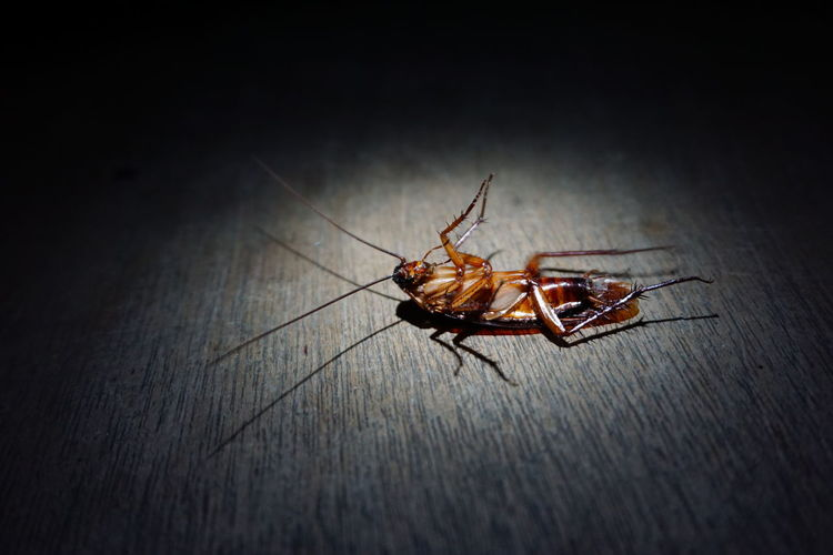Indoors  Insect