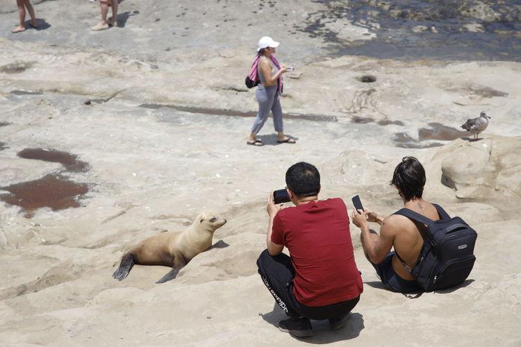 La Jolla Seal -