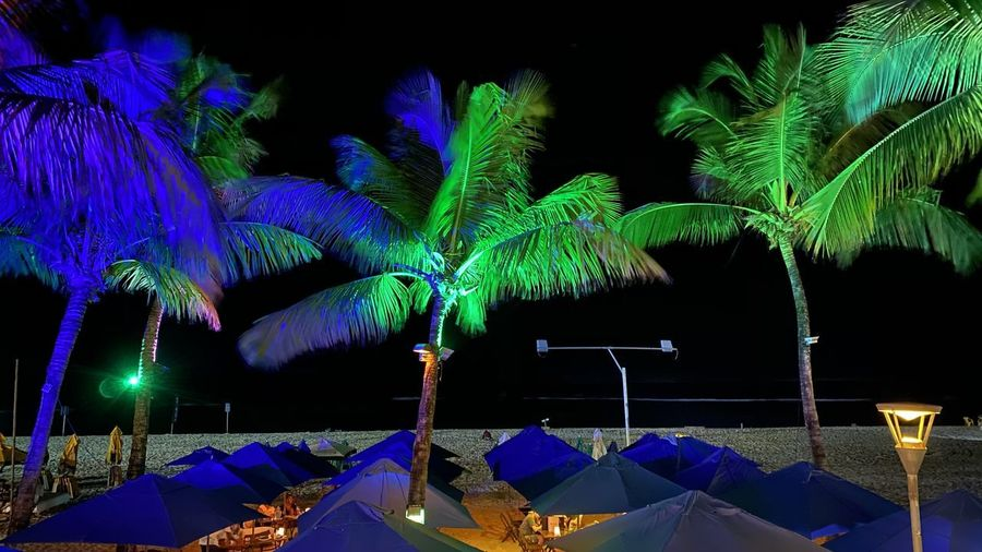 Illuminated plants by swimming pool against sky at night