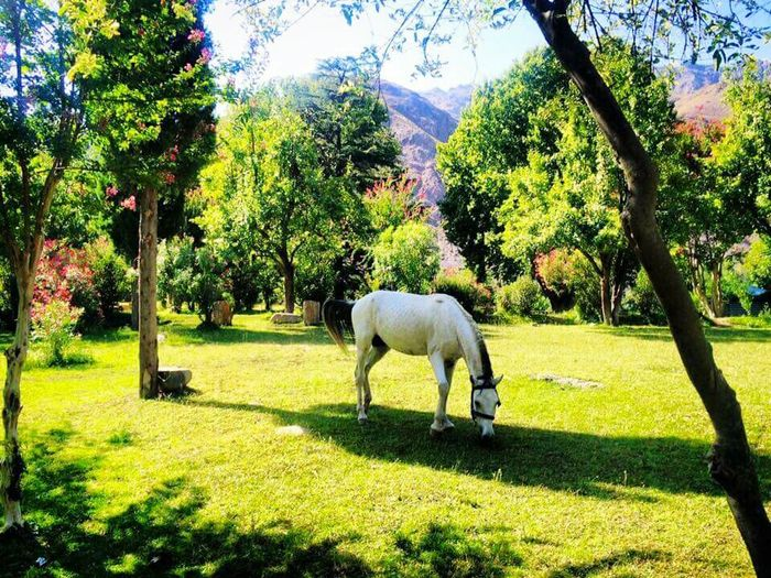 Nagar Fort CHITRAL kpk Pakistan Horse Nature EyeEmNewHere