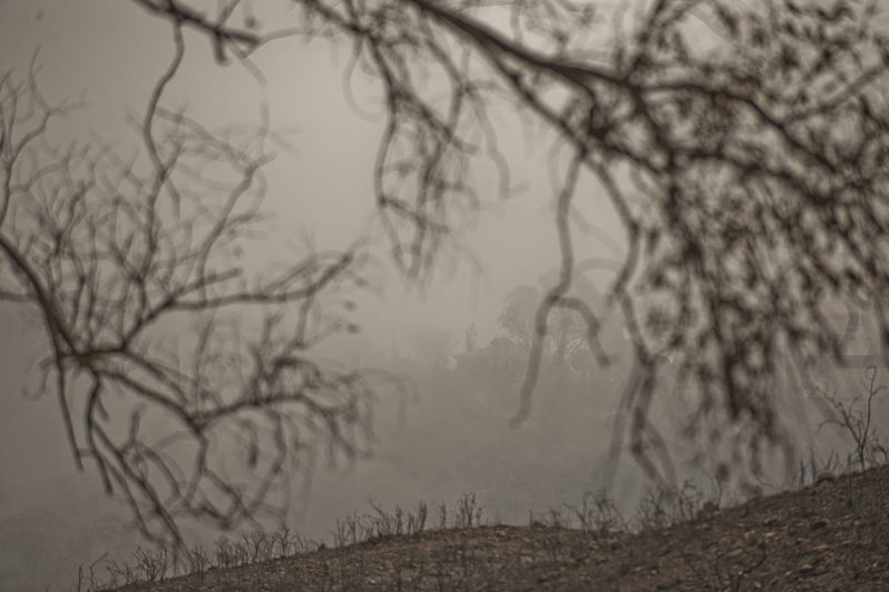 Bare Trees By Field During Foggy Weather