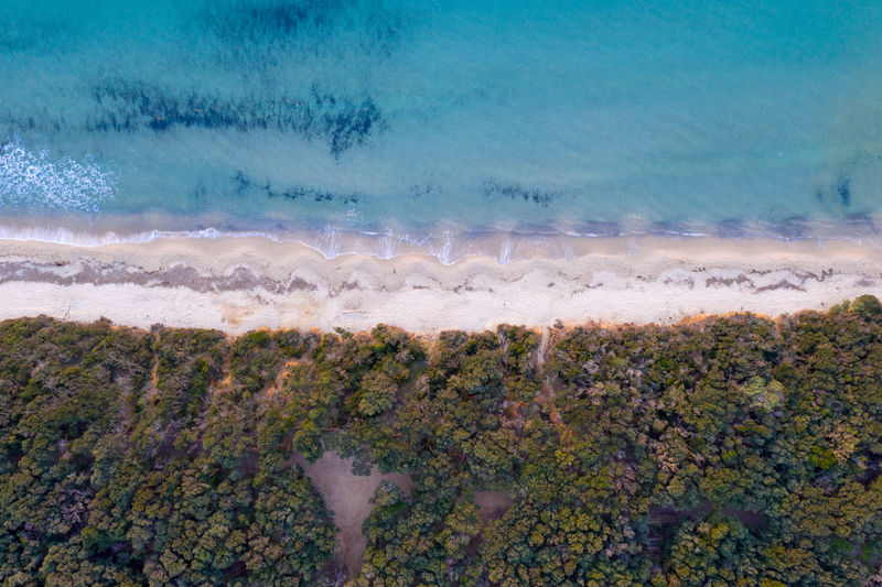 Aerial view of green landscape by beach
