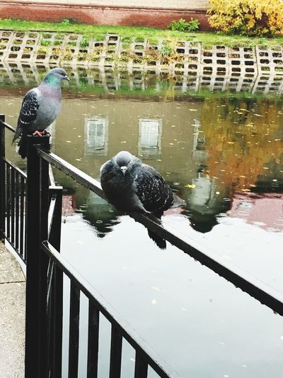 High angle view of bird on railing by lake