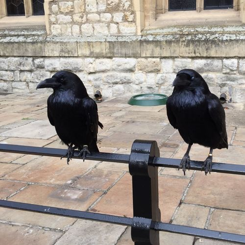 Black bird perching on wood