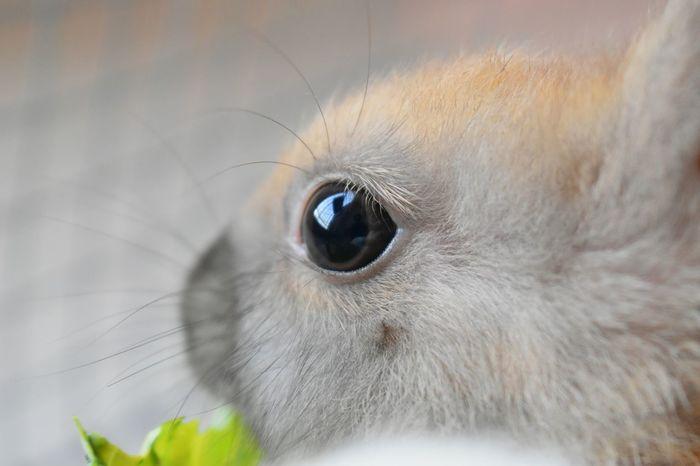 Rabbit 🐇 Day Pets One Animal Animal Eye Animal Body Part Eye Animal Themes Animal Head  Animal Hair Looking At Camera Close-up Mammal Alertness EyeEm Ready