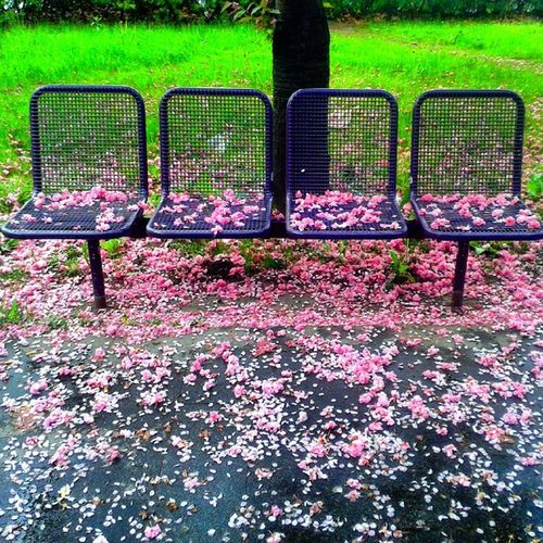 Flowerbench Pink Flower Missingspring In Zagreb