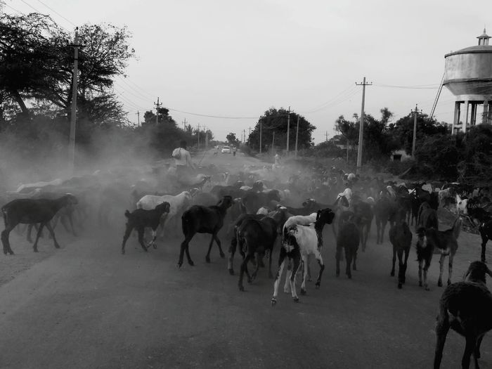 Unknown Journey Nature Creatures Of The World Roadside Dusty Road Unitygroup