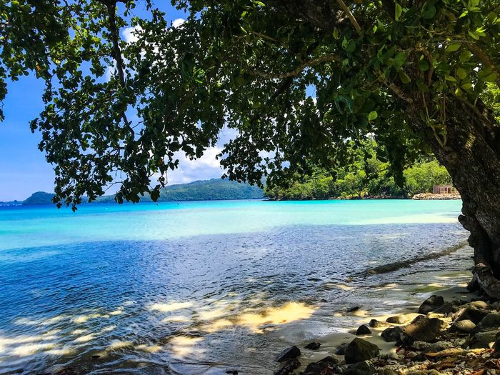 Housereef on Pulau We Diving EyeEm Nature Lover EyeEmNewHere Sumatra  Beach Beauty In Nature Blue Day Growth Idyllic Land Nature No People Outdoors Paradise Plant Rock Scenics - Nature Sea Sky Sunlight Tranquil Scene Tranquility Tree Water