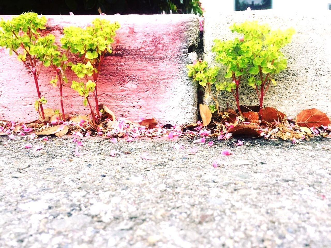 leaf, change, autumn, day, no people, outdoors, plant, nature, built structure, growth, flower, close-up, ivy, fragility, architecture