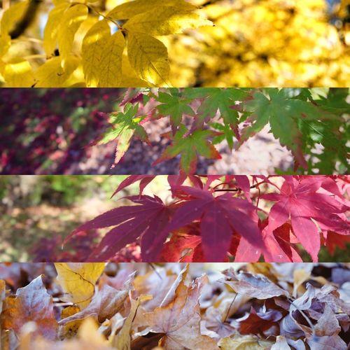MountWilson Maple Leaf Autumn Neon Life