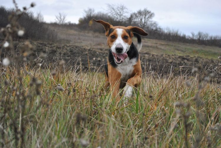 Nikon Dog Pets Domestic Animals One Animal Grass Animal Themes Mammal Field Looking At Camera Day Outdoors Portrait Growth Nature No People Sky