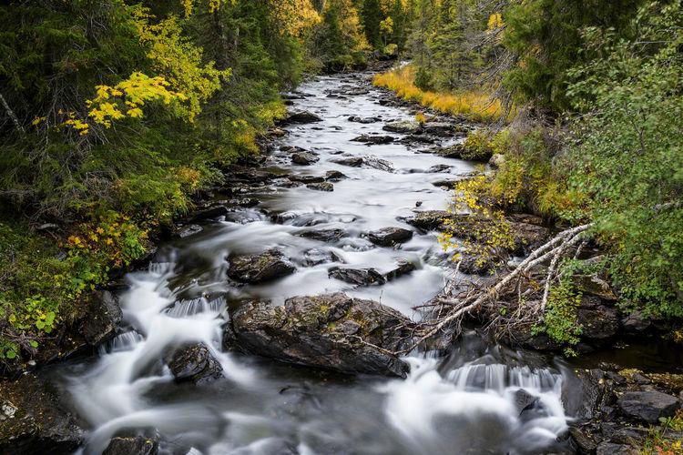 Creek Creekside
